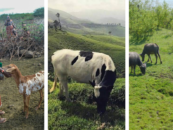 Webinar series: Unsustainable livestock farming and its alternatives in a time of COVID-19 – save the dates!
