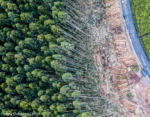 Our Nature is Not Your Solution – and FAO's Plantations are even less of a Solution!