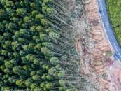 Notre nature n'est pas votre solutions – et les plantations de la FAO sont encore moins une solution!