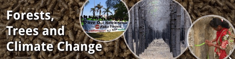 Forests, Trees and Climate Change