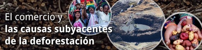 El Comercio y las Causas Subyacentes de la Deforestación
