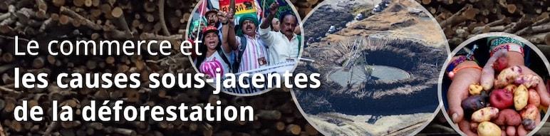 Le Commerce et les Autre Causes Sous-jacentes à la Déforestation