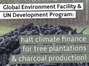 Lettre ouverte au Fonds pour l'environnement mondial et au PNUD : halte au financement climatique pour les plantations d'arbres et la bioénergie