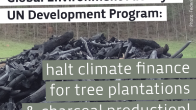 Open letter to the Global Environment Facility and UNDP: no more climate finance for tree plantations and bioenergy