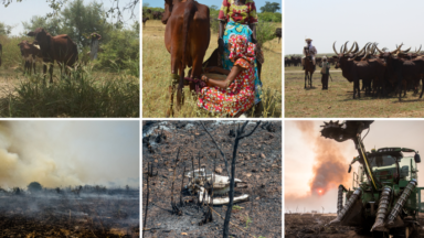 Contrasting food production models: forest destruction in Brazil vs forest conservation in Chad