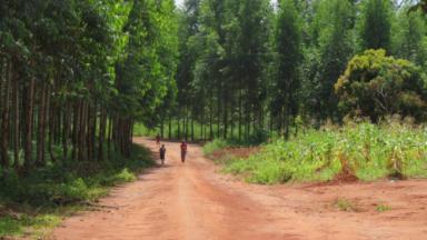 Empresa papelera denunciada en el momento del primer envío de eucalipto a Portugal desde Mozambique