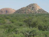 Les projets de brûler du bois namibien dans les centrales électriques allemandes sont dénoncés
