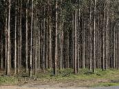 Le Fonds vert pour le climat entraîne un changement de paradigme, mais dans la mauvaise direction