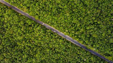 Un gran paso atrás: el Marco Mundial de la Diversidad Biológica posterior a 2020