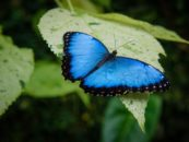 Civil society organizations and experts call draft new global action plan on biodiversity conservation disappointingly weak and unacceptable