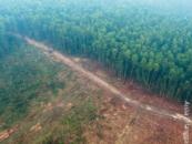 Asian Development Bank: Don't finance dirty biomass!