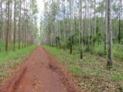AFR100: Driving commercial tree plantation expansion in Africa?